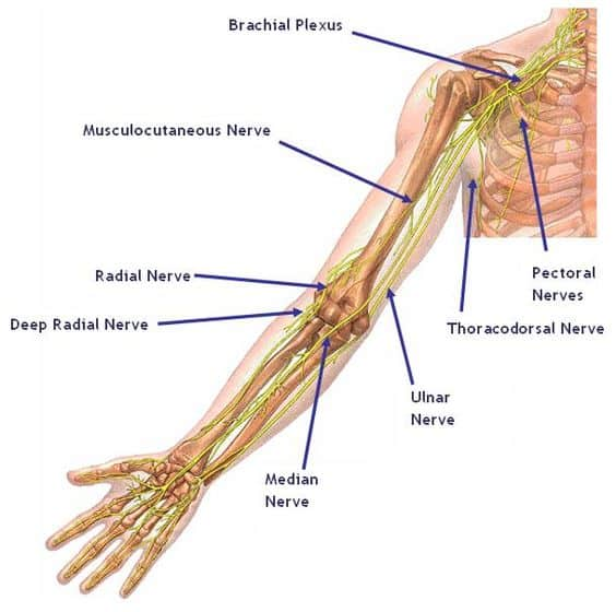 Wrist Anatomy And Carpal Tunnel Syndrome Brace Access