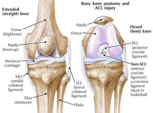 Knee muscles and ligaments diagram wiring diagram database why are knee injuries so common brace access rh braceaccess com knee anatomy pain location muscles and ligaments around knee ccuart Image collections