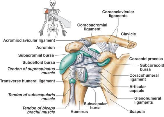 The Shoulder Joint Simplified - Brace Access