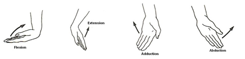 Wrist Anatomy and Carpal Tunnel Syndrome - Brace Access