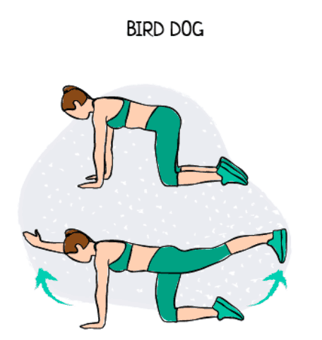 Bird Dog Yoga Pose Illustration Exercise