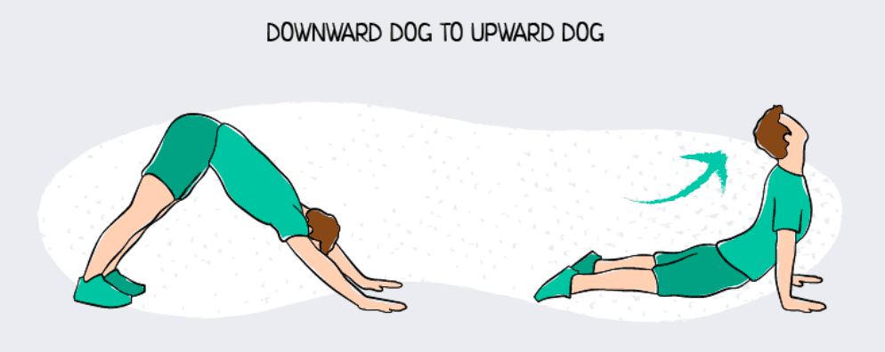 Downward to Upward Dog Yoga Pose Sequence Exercise